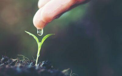 Mayor seguridad alimentaria y menor consumo de agua